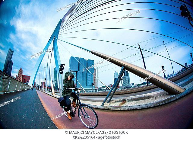 Biking against wind in Erasmus bridge, Rotterdam, Holland