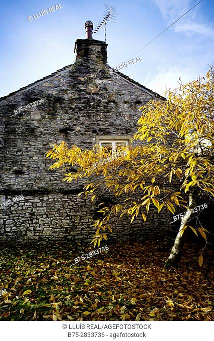 Rear facade of a house with a tree in the garden. Grassington, Yorkshire Dales, North Yorkshire, Skipton, UK