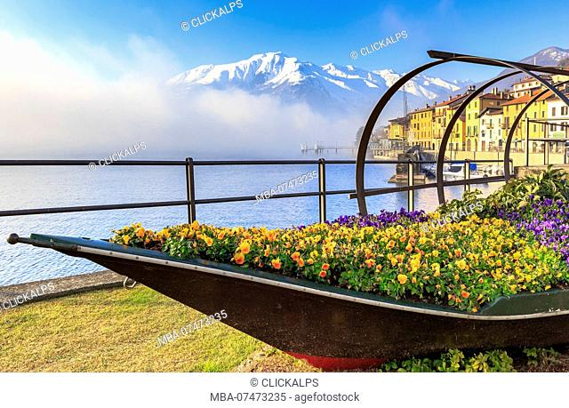 Colored flowers in bloom on a traditional Como Lake boat / Lucia,. Domaso, Como Lake, Lombardy, Italy, Europe