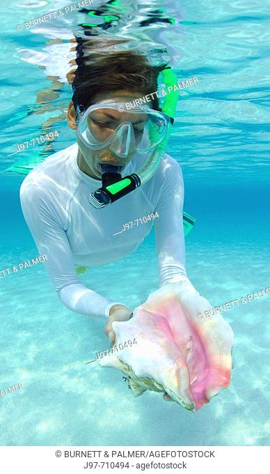 A snorkeler finds a pink conch shell in the shallows off Rainbow Beach, Eleuthera, Bahamas, Atlantic Ocean