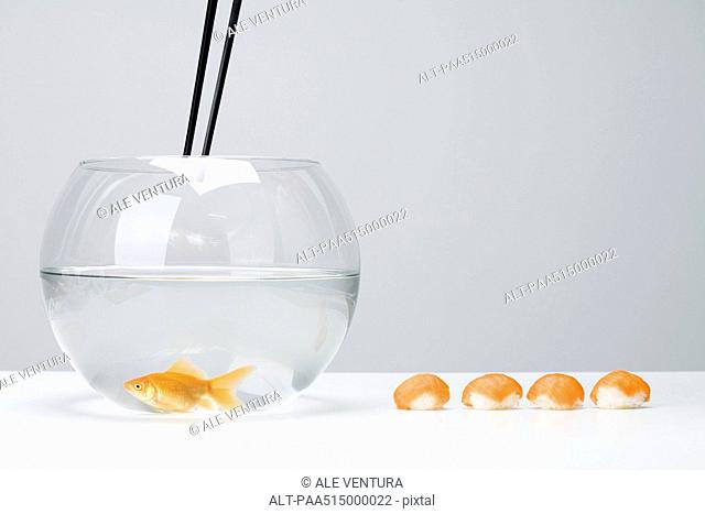 Chopsticks held above goldfish in bowl, row of nigiri sushi arranged nearby