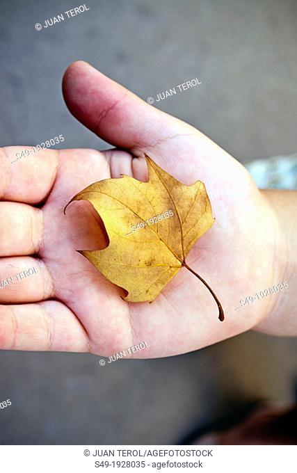 Girl Holding Autumn Leaf