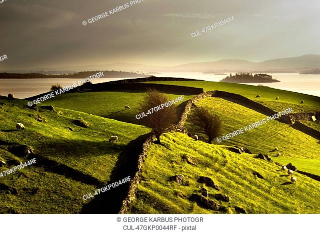 Stone walls on grassy rural hillside