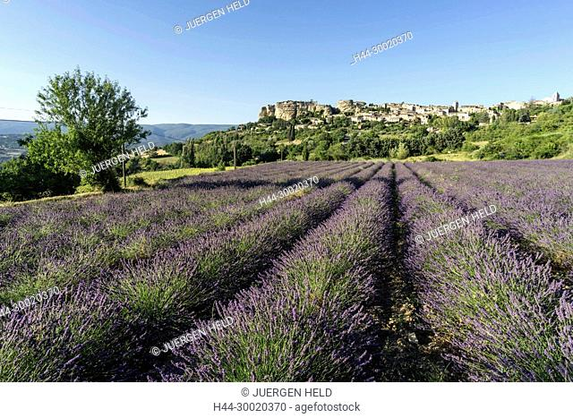 France, Alpes-de-Haute-Provence, Luberon, View of village of Saignon with field of lavander in bloom, Provence
