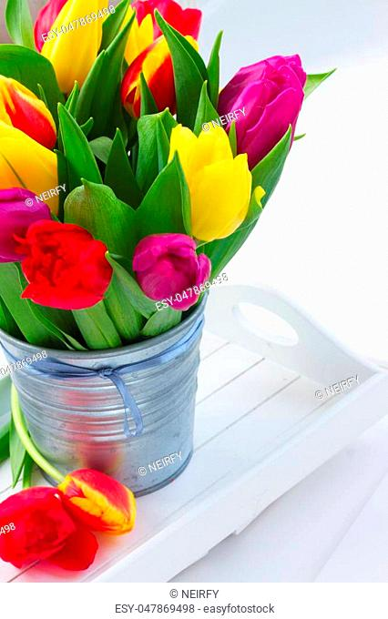 fresh yellow, purple and red tulip flowers in metal pot close up