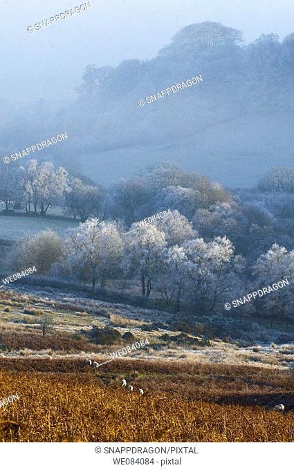 A view of Mynydd Epynt high moorland, Powys, Wales, UK, Europe