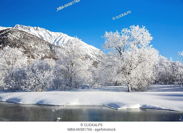 Winter landscape with trees covered in hoarfrost and frozen pond, Celerina, Engadin, Graubunden, Switzerland