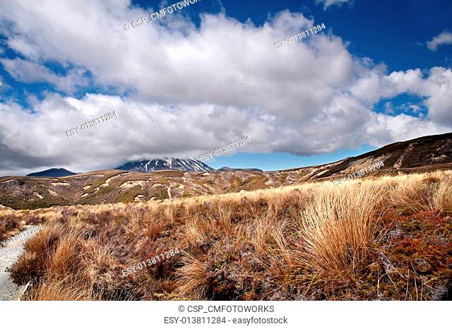 Meager landscape in the Tongariro National Park