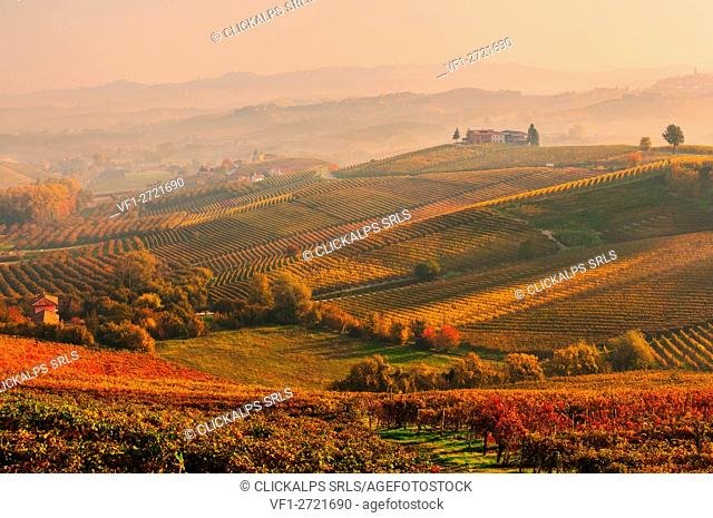 Barolo hils at sunset. europe. piedmont. cuneo district. langhe. barolo