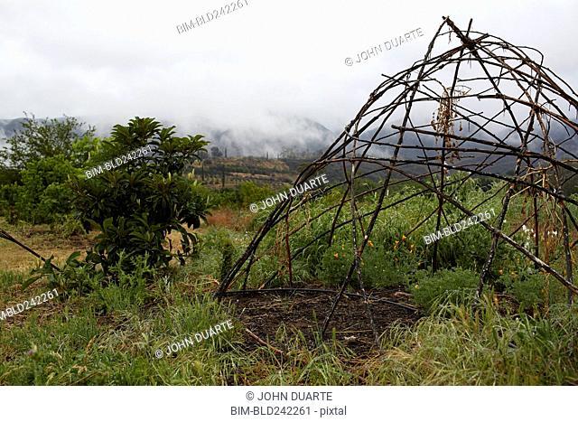Wood teepee frame in organic farm field