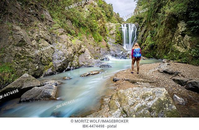 Hiker in front of Piroa Waterfall, Maungaturoto, Northland, North Island, New Zealand