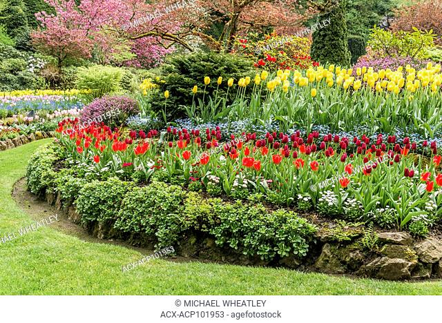 Tulip bed, Butchart Gardens, Brentwood Bay, near Victoria, British Columbia, Canada