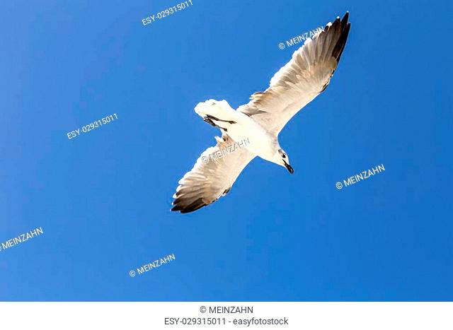 seagulls flying in blue clear sky