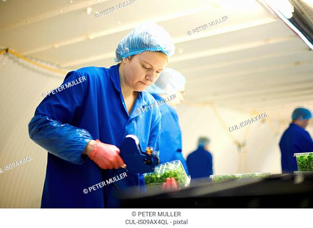 Woman wearing hair net on production line using price gun