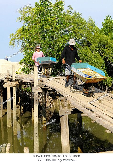 Salt fields of samut sakhon, labourers harvesting salt, samut sakhon , Thailand