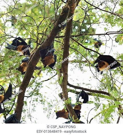 Bats on the tree