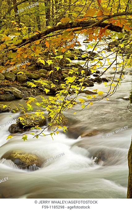Autumn, Greenbrier, Great Smoky Mountains National Park