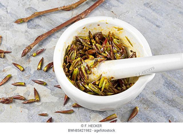 balsam poplar (Populus spec.), poplar-tincture, alcoholic essence from buds, Germany
