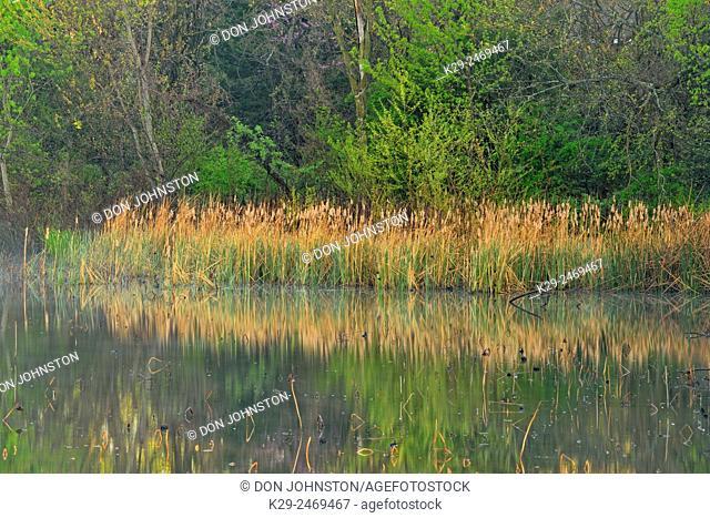 Reflections in a pond, Lebanon, Missouri, USA