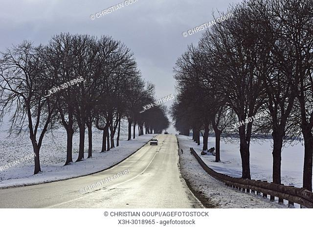 tree-lined country road through the Beauce region covered with snow, department of Eure-et-Loir, Centre-Val-de-Loire region, France, Europe