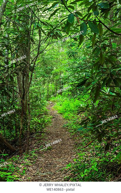 Greenbrier Area, Great Smoky Mountains National Park ,TN