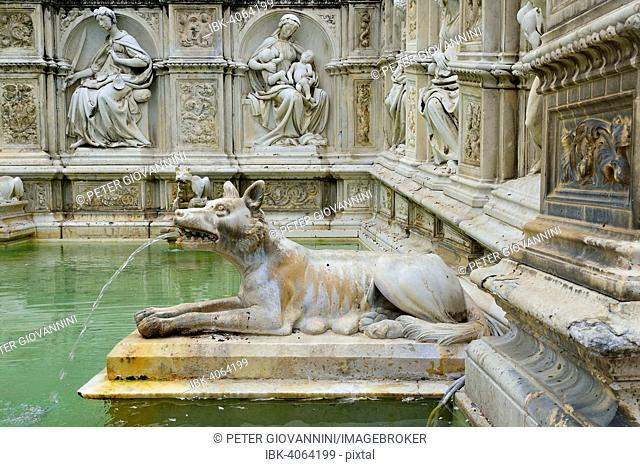 She-wolf spouting water in the Fonte Gaia fountain, Piazza del Campo, Siena, Province of Siena, Tuscany, Italy