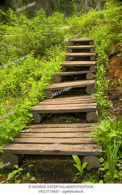 Cliff Lake Trail stairs, Lolo National Forest, Montana