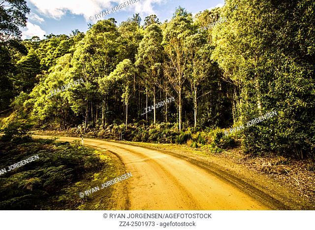 Bright vivid horizontal background of a road taking a turn through lovely temperate countryside. Judbury, Tasmania, Australia
