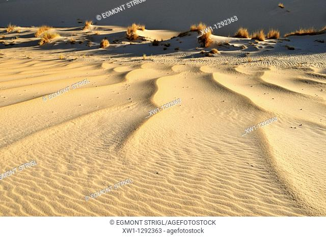 sanddune of Erg Tihodaine, Wilaya Tamanrasset, Algeria, Sahara, North Africa