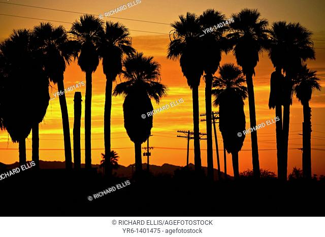 Sunrise over palm trees along the coast of the Salton Sea Imperial Valley, CA