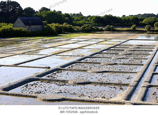 Salt production in La Trinite-sur-Mer, Brittany, France, Europe