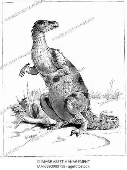 Reconstruction of Iguanadon, large herbivorous dinosaur, sketched from model on show at the Natural History Museum, London  From 'The Illustrated London News'...