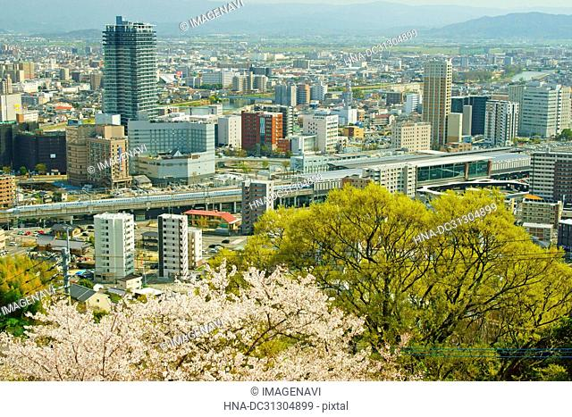 Kyushu Shinkansen and Cherry Blossoms