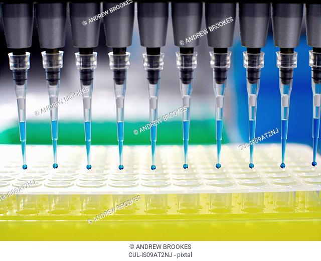 Pipetting samples into multi-well dish in laboratory