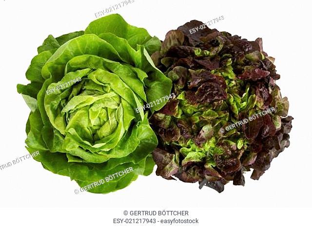 Grüner Salat isoliert auf weißem Hintergrund