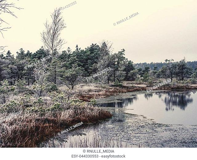 Pine Trees in Field of Kemeri moor in Latvia with a Pond in a Foreground on a Cold Winter Morning with some Frost on them - vintage look edit