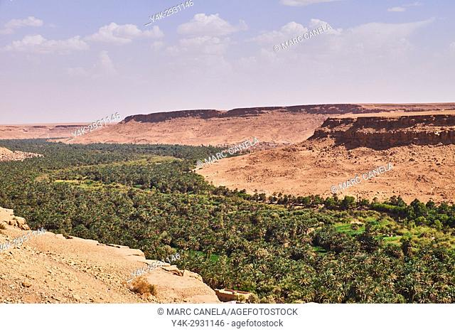 Africa, Morocco Ziz River Valley huge palm grove