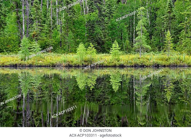 Boreal forest reflections in Antrim Lake, Halfway Lake Provincial Park, Ontario, Canada