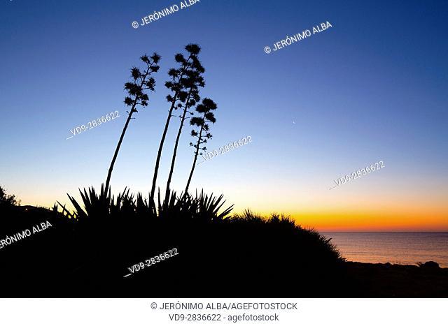 Beach at sunrise, Mijas. Malaga province. Costa del Sol, Andalusia Southern Spain. Europe