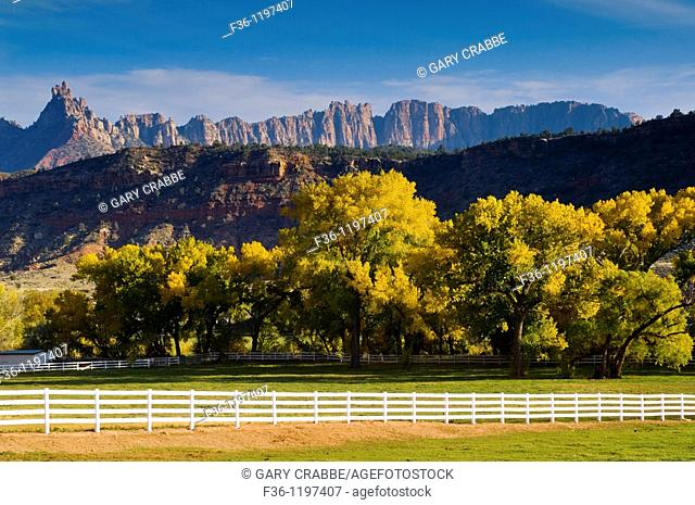 Cottonwood trees in fall next to ranch corral near Springdale, Utah