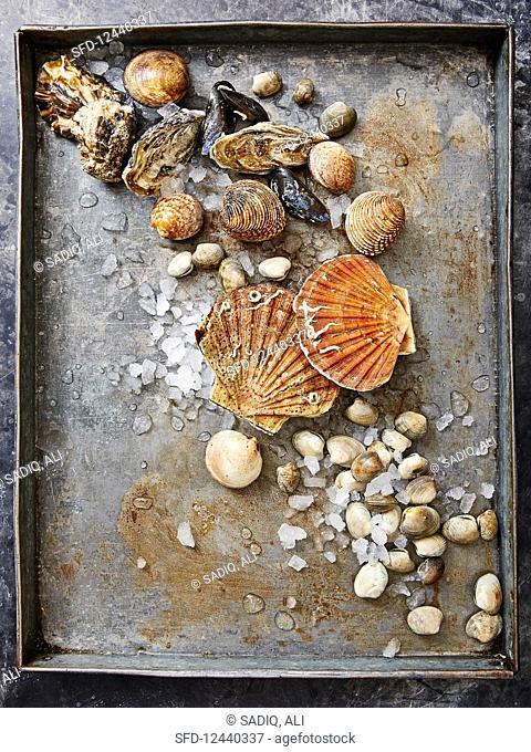 Various fresh mussels on a baking sheet