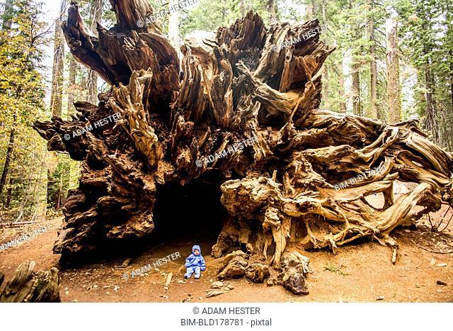 Caucasian girl sitting under ancient tree