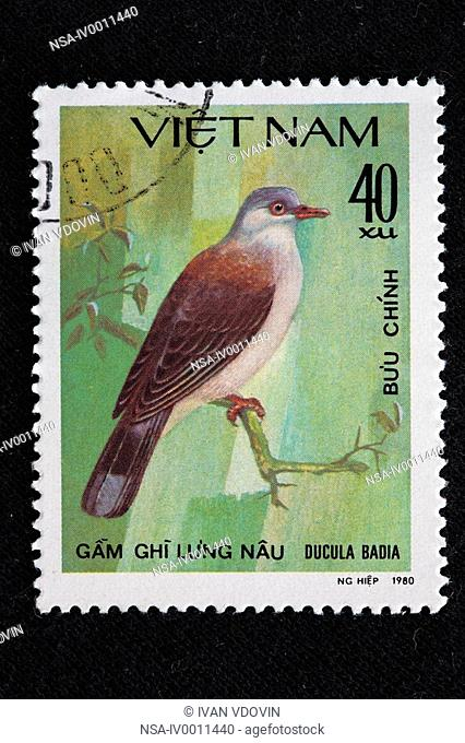 Mountain Imperial Pigeon Ducula badia, postage stamp, Vietnam, 1980