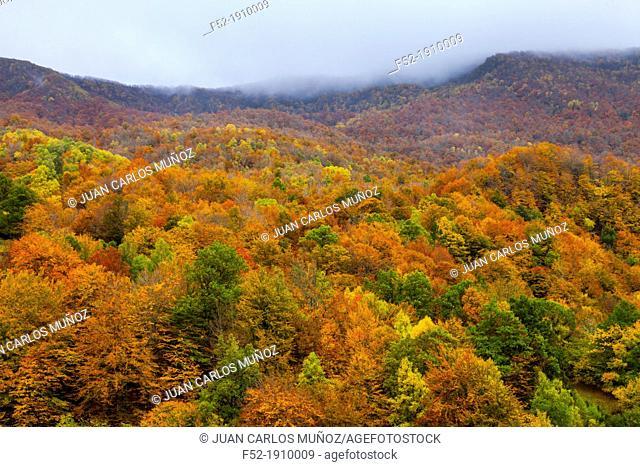 Beech forest, Fuentes del Narcea, Degaña e Ibias Natural Park, Asturias, Spain, Europe