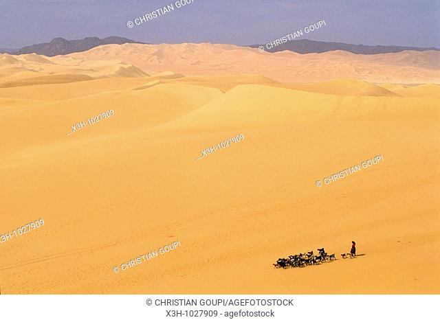 shepherdess and herd in vastness of Arakao's dunes,Aïr,Niger,Western Africa