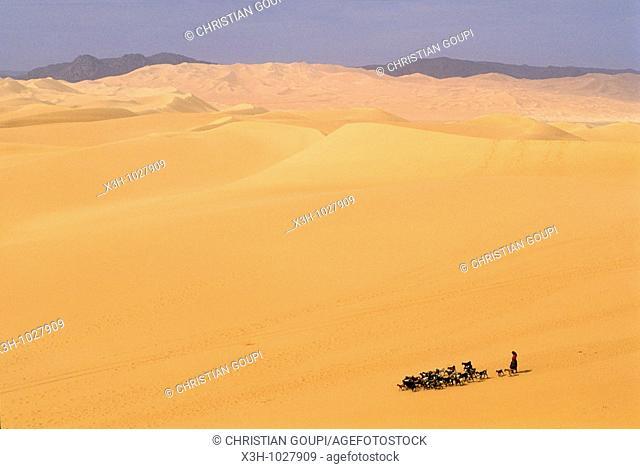 shepherdess and herd in vastness of Arakao's dunes,Aïr,Niger,Western Africa