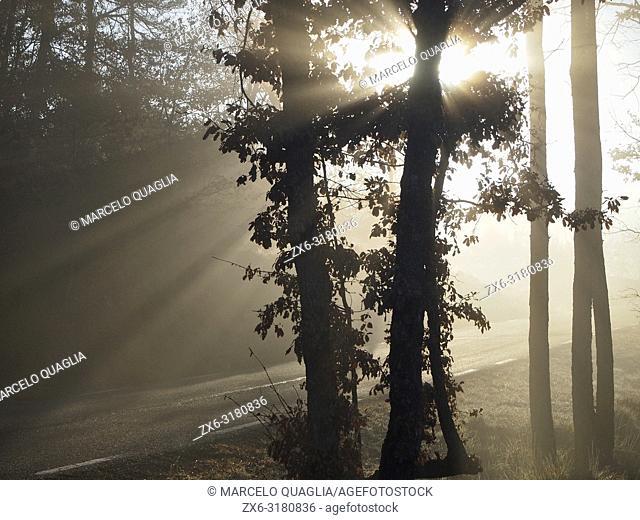 Sun rays through oak trees on a foggy winter morning. Lluçanès region, Barcelona province, Catalonia, Spain
