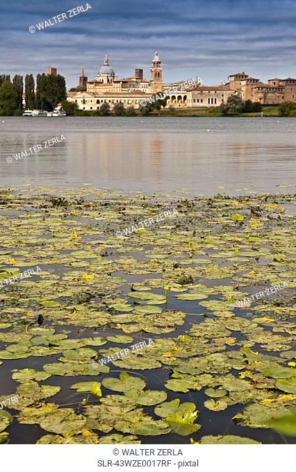 Lily pads in still lake