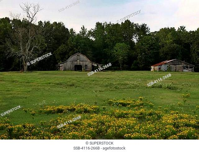 Two abandoned barns in a field, Arkansas, USA