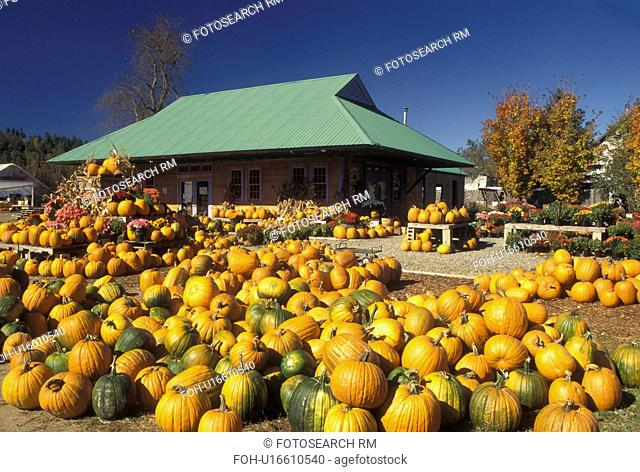 pumpkins, autumn, Vermont, Pumpkins for sale at Settlement Farm Market in the fall in Middlesex in Washington County in the state of Vermont